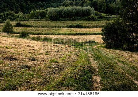 a lonly path at bieszczady mountains, Poland