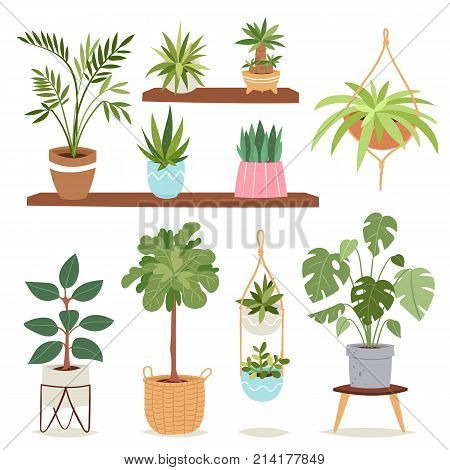 House plants tree vector nature flowers indoor interior decoration houseplant natural tree flowerpot illustration. Natural green gardening blossom foliage.