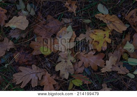 The Autumn background with leaves and rain water drops,