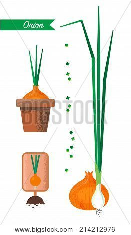 Onions and green onions. Set of images of onions, flower pot, sliced green onions