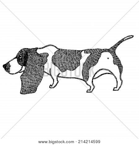 Basset Hound Hand drawing Isolated vector object