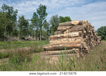 Big pile of tree trunks in the forest cut by woodman