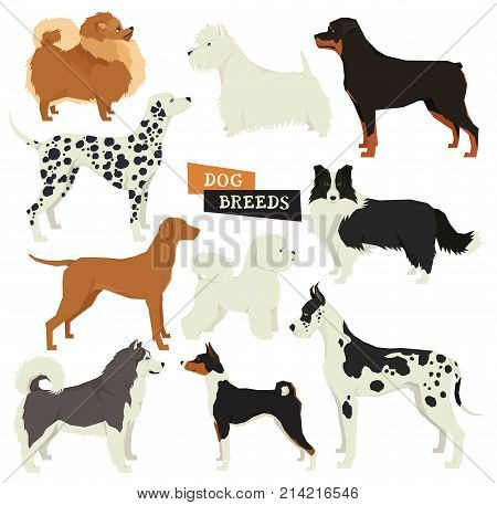 Dog collection. Geometric style. Vector set of 10 dog breeds. Isolated objects Part four set