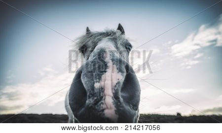 Extreme Close Up Potrait of Wild Pony