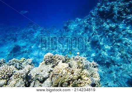 Landscape of the seabed with coral, reef