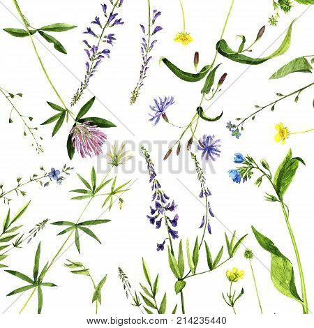 watercolor drawing wild plants with flowers, buds and leaves, painted botanical illustration in vintage style, color floral template, hand drawn natural background
