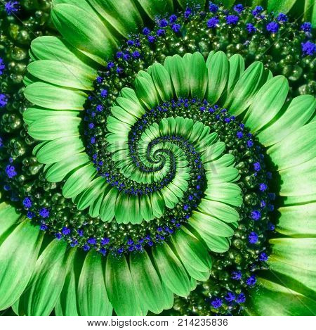 Green camomile daisy flower spiral abstract fractal effect pattern background. Green blue flower spiral abstract pattern fractal. Incredible flowers pattern round circle spirally background