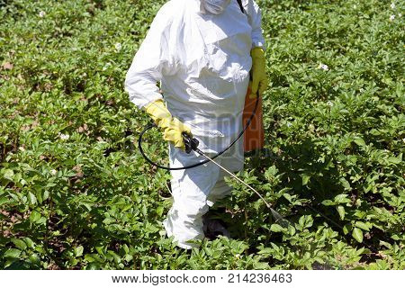 Farmer spraying toxic pesticides or insecticides in the vegetable garden