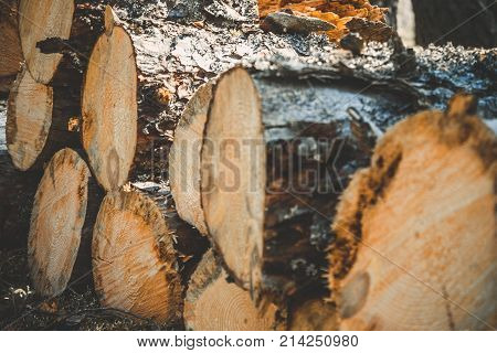 logs of trees in the forest after felling. felled tree trunks. Logging. Selective focus on photo.