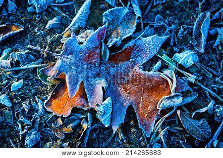 frosted autum leaf - abstract natural background