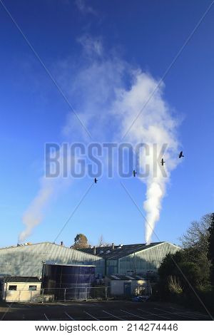 Birds and smoke from factory against blue sky