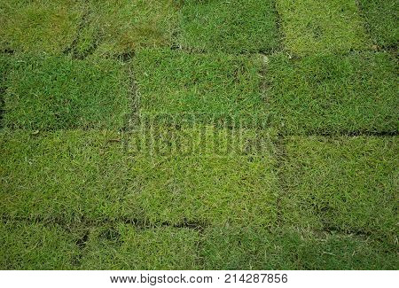 Recently planted natural green grass patch which can be used as background