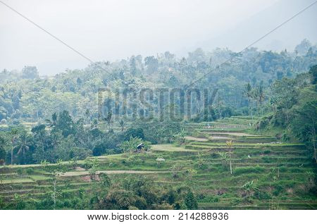 Green rice terrace horticulture plantation on misty mountain