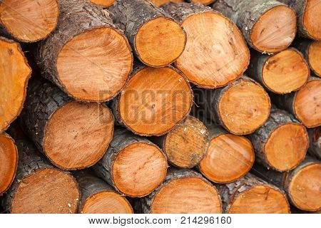 Preparation Of Firewood For The Winter. Firewood Background.