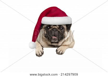cute Christmas pug puppy dog wearing red santa hat hanging with paws on blank white banner isolated on white background