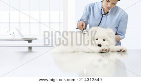 veterinary examination sick dog veterinarian with stethoscope on table in vet clinic