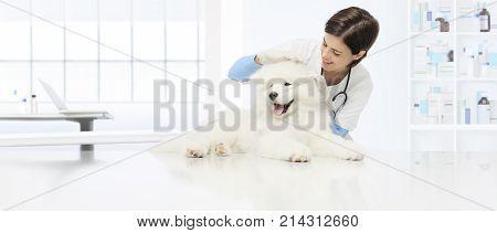 veterinary examination dog veterinarian checks the ears dog on the table in vet clinic