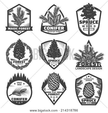 Vintage monochrome conifers labels set with fir spruce pine trees branches and cones isolated vector illustration