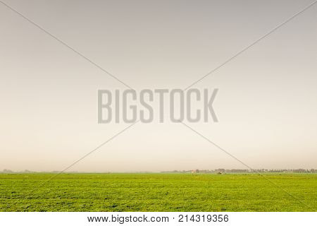 Pasture at Heeg in Friesland in The Netherlands.