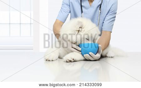 clinically tested products veterinary examination dog with kibble dry food in bowl on table in vet clinic animal diet concept