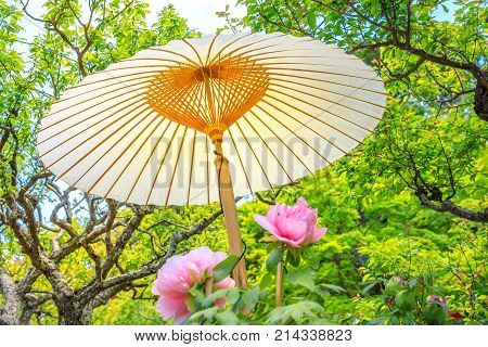 Japanese big paper umbrella in Buddhist temple with leaves and trees in the background. Hase-dera, Kamakura, Japan. Japanese culture concept. Oriental background.