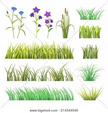 Vector grass green herb and flowers nature isolated on white background design template grassy elements illustration. Summer grass texture land season natural grassy plants.