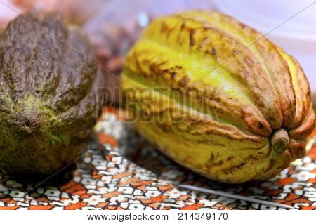 Cacao fruit raw cacao beans cocoa pod