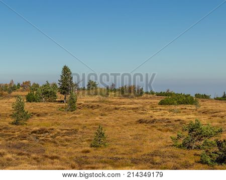 Autumn forest, moor in the black forest, baden w rttemberg, germany