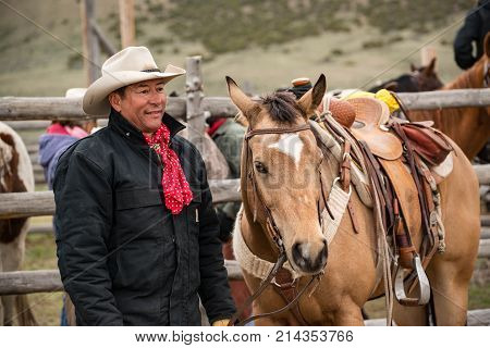 Cowboy wrangler with saddled buckskin horse at the corral ready to ride