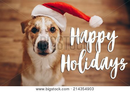 Happy Holidays Text, Seasonal Greetings Card Sign. Dog In Santa Hat. Space For Text. Cute Surprised