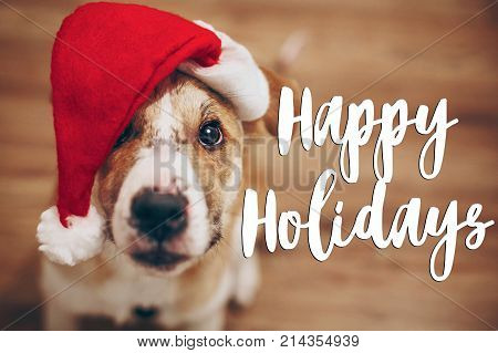 Happy Holidays Text, Seasonal Greetings Card Sign. Dog In Santa Hat.  Cute Brown Dog In Red Hat Sitt