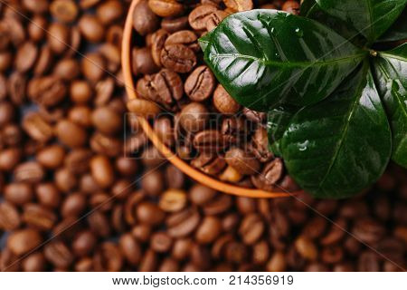 Coffee Plant Tree And Roasted Coffee Beans. Top View