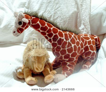 Giraffe And Camel