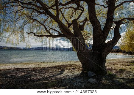 beautiful scenic of lake wanaka most popular traveling destination in southland of new zealand