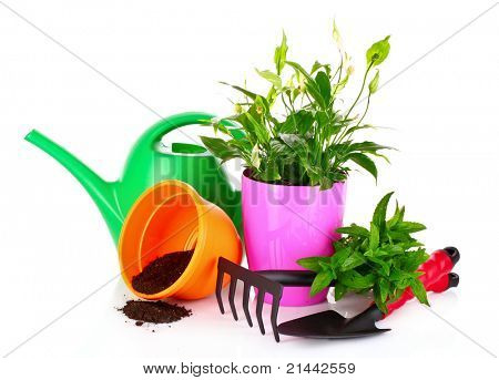 gardening and plant isolated on a white background