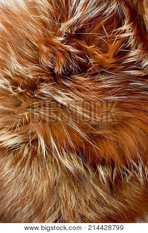 The texture of brown shiny fur. The concept of Greenpeace. Refusal to wear coats