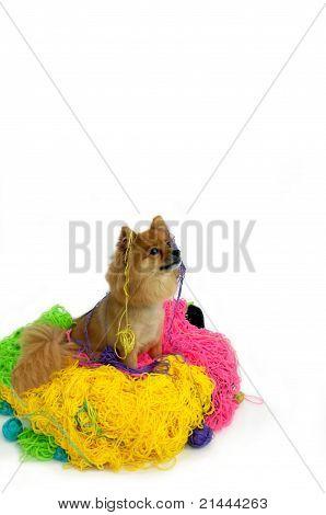 Nest Of Yarn