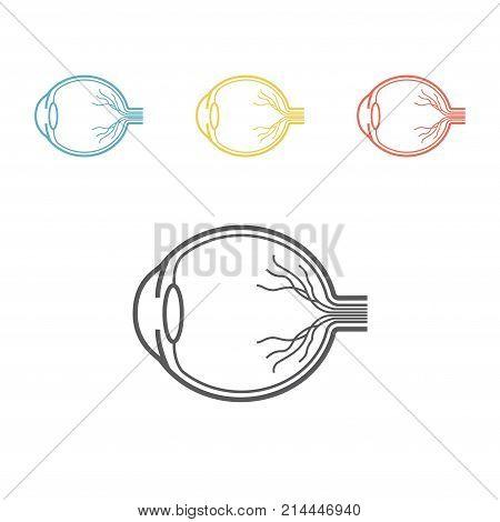 Eyeball anatomy line icon Vector signs for web graphics