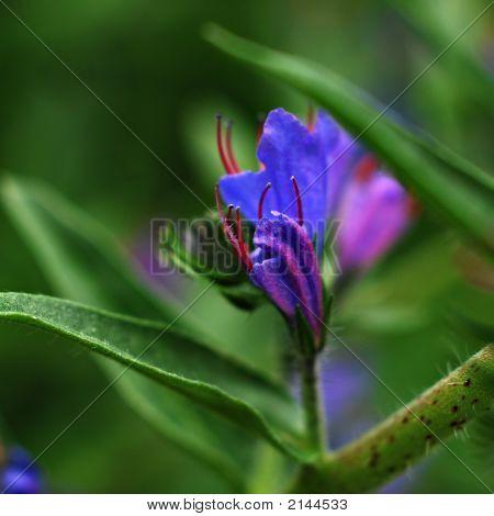 Blue Flower Macro Square