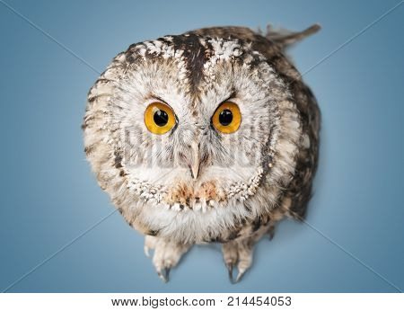 Beautiful great owl one animal isolated on white studio shot animal themes