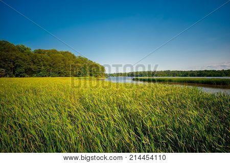 View of marshland landscape in Ontario's Royal Botanical Garden aka RBG during summer time