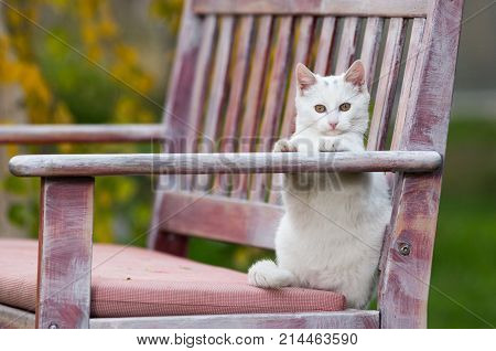 Small White Cat Playing On Bench