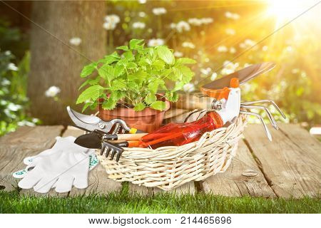 Garden flowers utensil gardening utensils pot green