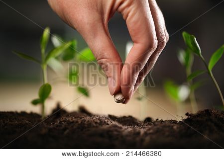 Plant seed seeds soil planting green small