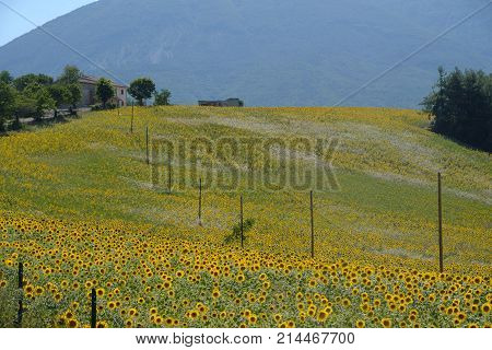 Landscape Near Ascoli Piceno At Summer