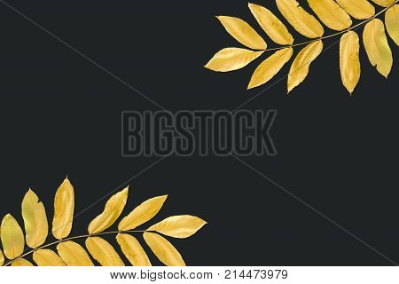 Twigs With Yellow Autumn Leaves