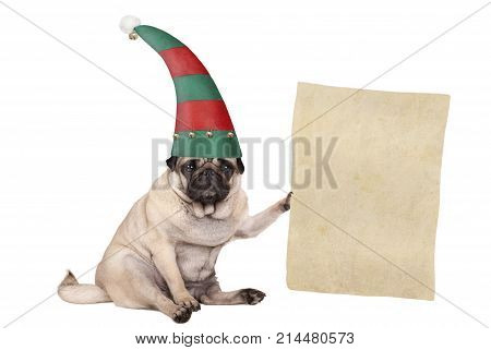 Christmas pug puppy dog sitting down and wearing elf hat holding paper scroll isolated on white background