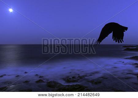 Full moon over Atlantic Ocean an flying raven - Los Cocoteros, Lanzarote, Canary Islands, Spain