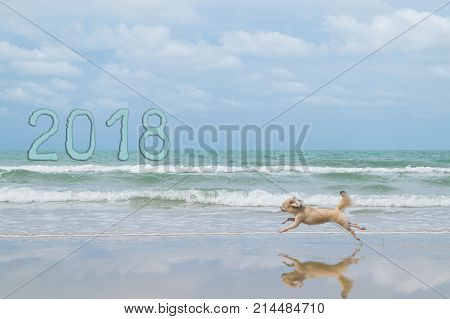 Dog so cute mixed breed with Shih-Tzu Pomeranian and Poodle travel run on beach Beige color New Year's 2018