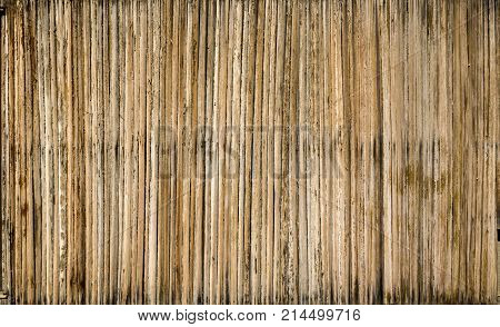 Bamboo Background Texture of Vertical Bamboo Sticks.
